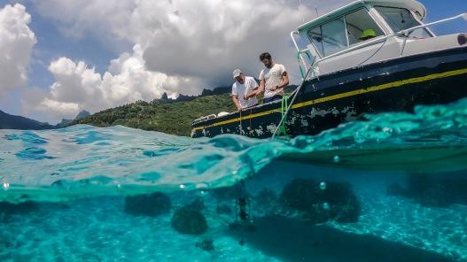 BIOGAPS Project. Gump Station (USA), Moorea Island (French Polinesia). April, 2018.