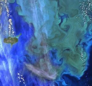 Phytoplankton bloom. Source: NASA Ocean.